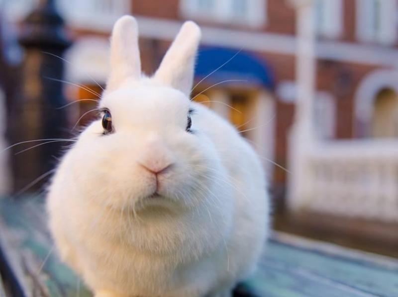 """[東京池袋]在兔子咖啡館和兔子一起玩吧!從池袋站步行5分鐘的"""" 1小時包車點心方案""""の紹介画像"""