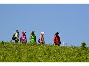 【北海道・礼文島】春の桃岩展望台コーストレッキングプラン