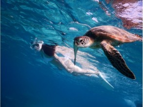 【Okinawa · Miyakojima】 ☆ Encounter rate 100% ☆ Image of the photo tour swimming with sea turtle