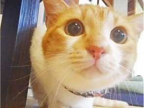 【神奈川・横須賀】猫ちゃんたちとゆるゆる過ごす♪〔60分・1ドリンク付き〕の画像