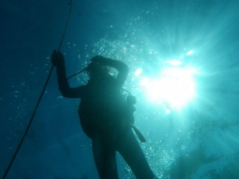 [Kagoshima ・ Tanegashima]Tanegashima Is a dragon Miyagi! Experience Diving plan(half-day course)の紹介画像