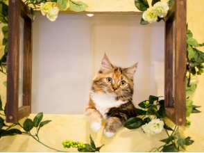 【埼玉・川越】ネットしたり。コミックを読んだり。猫さんとふれあう〔60分コース〕の画像