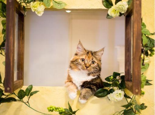 【埼玉・川越】ネットしたり。コミックを読んだり。猫さんとふれあう〔60分コース〕