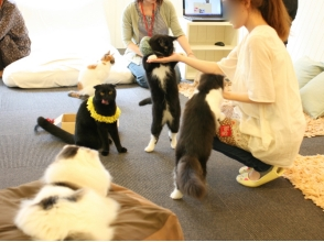 【Saitama · Kawagoe】 netting. Read comics. Picture of contacting cat [time unlimited course] image