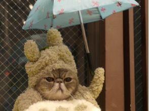 [ไซตามะ, Omiya] สบายสบายในพื้นที่กว้าง ภาพของแมวและโต้ตอบ [60 นาทีสนาม]