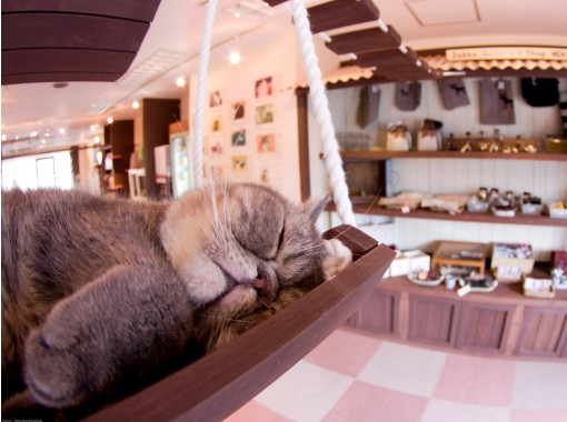 Cat Cafe Cat House Omiya Store