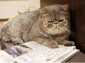 【Saitama · Omiya】 Relaxingly relaxing in a large space. Picture of contacting cat [time unlimited course] image
