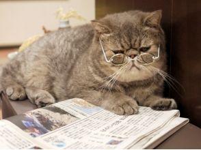 【埼玉・大宮】広い空間でゆったりのんびり。猫さんとふれあう〔時間無制限コース〕の画像
