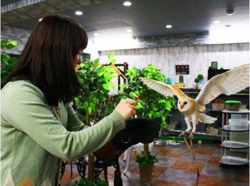 【東京・池袋】フクロウカフェで楽しくふくろうと遊ぼう!(平日コース:時間無制限)池袋駅より徒歩3分!