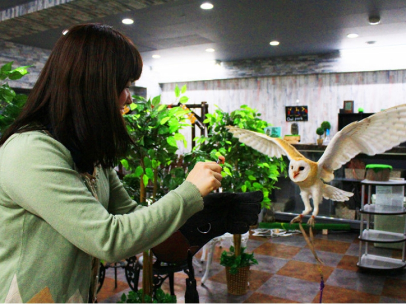 【Tokyo · Ikebukuro】 Let's play with the owl cafe happily. Introduction image of [weekday course: unlimited time]