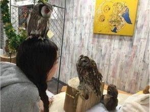 【Tokyo · Ikebukuro】 Simultaneously experience owl cafe & hedgehog cafe! [Saturdays-and-Sundays congratulation course: 90 minutes] picture