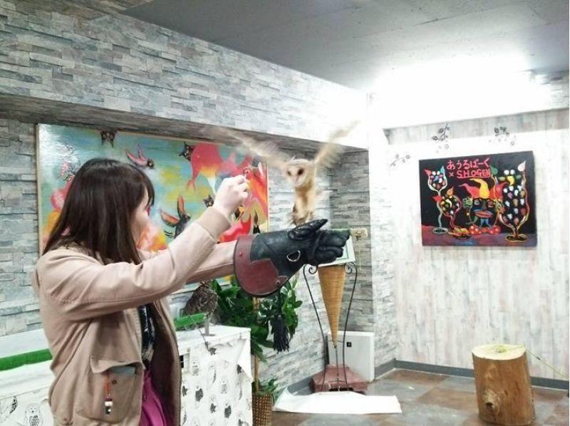 【東京・池袋】フクロウカフェで楽しくふくろうと遊ぼう!(貸切コース:90分)池袋駅より徒歩3分!の紹介画像