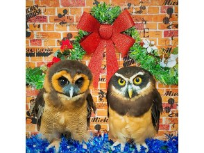 [Tokyo / Ikebukuro Owl] Tokyo Owl Cafe Charter! Cosplay photo session, birthday event, etc. (Chartered course: 90 minutes) 3 minutes walk from Ikebukuro station!