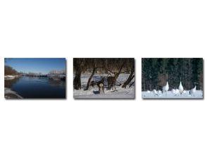 冬季只有釧路獨木舟私人之旅[獨木舟和丹頂鶴觀察當然]180分鐘