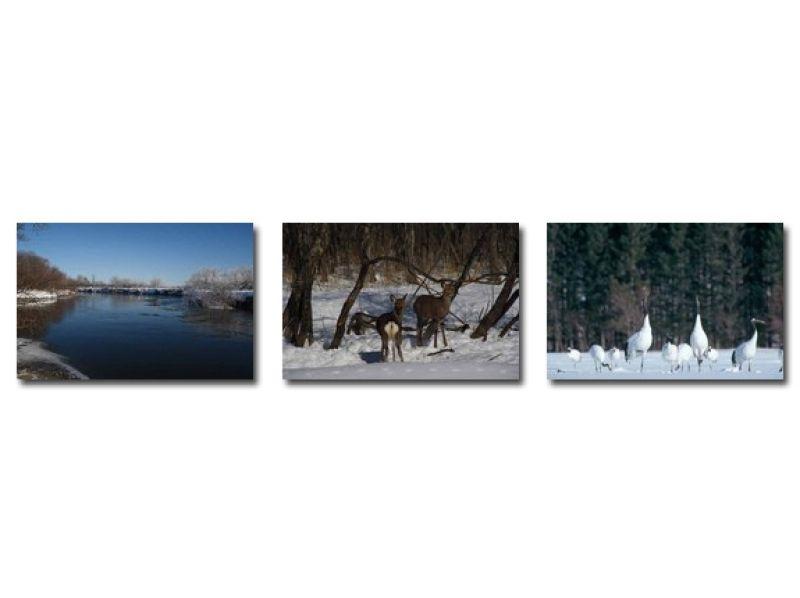冬季只有釧路獨木舟私人之旅[獨木舟和丹頂鶴觀察當然]180分鐘の紹介画像