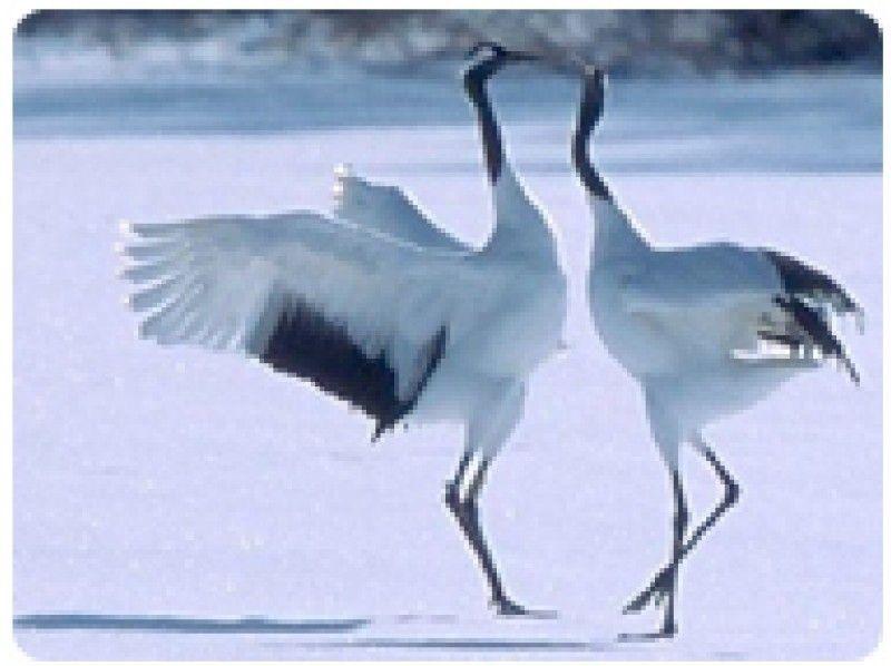冬季限定 釧路湿原カヌープライベートツアー【ぐるっと湿原と丹頂観察】150分の紹介画像