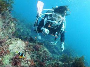 【静岡・伊豆】丁寧なサポートで安心! 海の生き物に出会える体験ダイビング!の画像