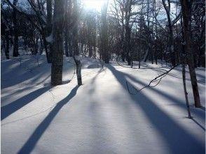 【福島・裏磐梯】粉雪と巨樹の森へ!猫魔スノーシュートレッキング