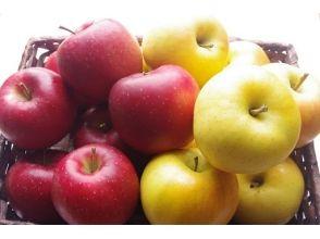 【Fukushima / Ninomatsu】 <9/16 ~ 10/31> Held all-you-can-eat apple hunt & 60 minutes all-you-can-eat plan
