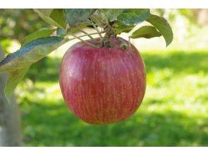 【福島・二本松】<9/16~10/31開催・1日3組限定>りんご狩り&60分食べ放題(お土産付き)の画像