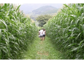 Giant maze experience of corn field and Tokyo Lusk Izu Factory tour ~ With lunch at dairy kingdom ~ 【9979】