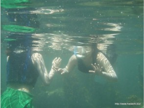 【Miyazaki · Nichinan Coast】 Snorkel experience challenge! For children! Let's go find the tropical fish! Image of