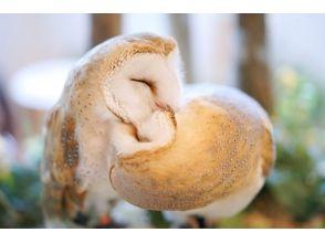 【東京・原宿】原宿最大のフクロウとタカのテーマパーク!ふれあい60分プランの画像