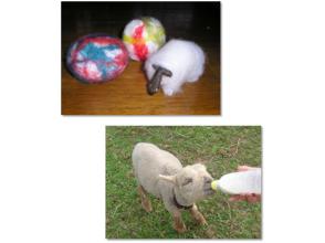 [北海道/新雪谷]羊蹄山脚下的放松羊毛手纺体验计划