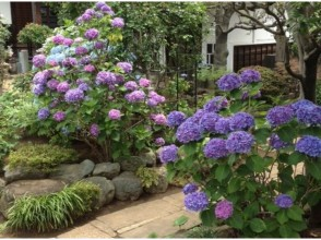 "«Limited time! Guide Hydrangea's Holocaust course! »A tour of Yanaka where you do not know about rickshaw and otakuya"" [8095]"