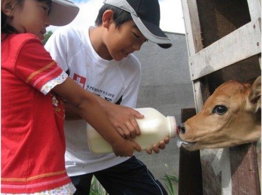 【北海道・美瑛町】仔牛のミルクやり(15分)哺乳ビン1本分★