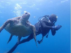[伊豆八丈島]島以滿足海龜,在八丈島盡情體驗潛水的樂趣!平日優惠計劃