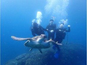【伊豆諸島・八丈島】八丈島の青い海を楽しもう!2日~4日でオープンウォーターライセンスが取得できる!の画像