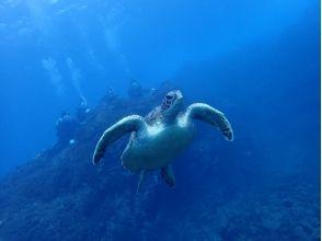 【伊豆諸島・八丈島】海ガメに会える島、八丈島で体験ダイビングを楽しもう!素敵な休日・土日祝日プランの画像