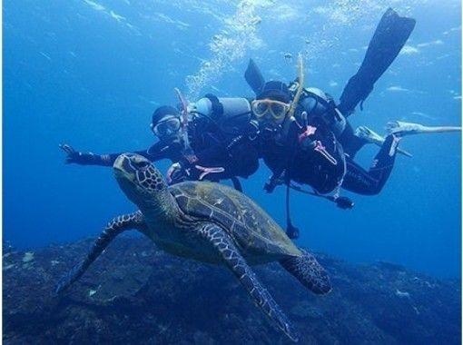 【東京都・八丈島】アオウミガメと泳ぐ体験ダイビング!遭遇率98 %超!ウェアラブルカメラ 貸出つき!