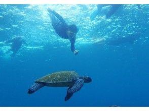 [東京,八丈島]我想在海除外!第一次沒關係!浮潛體驗!