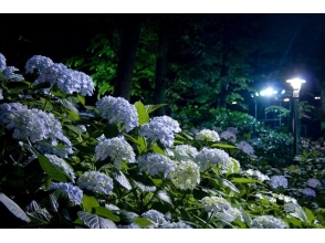 "«Limited on 24th» ""Hydrangea night"" & Tokyo Tower's Milky Way illumination viewing bus tour 【10207】"