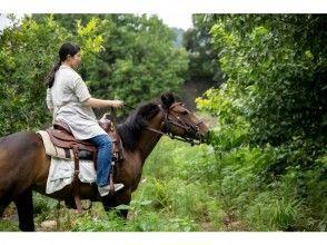 【東京・日野】ホーストレッキング ♪ 90分とTeaTime・ゆっくり乗馬したい方にオススメコースの画像