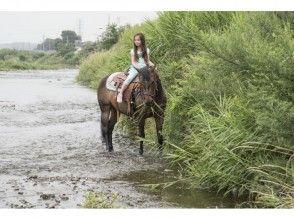 【東京・日野】浅川河川敷で ♪ 貸切乗馬たっぷり180分とゆっくりTeaTimeの画像