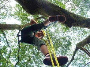 【Kumamoto · Aso】 Tree climbing ☆ 6 years old ~ OK! Even beginners can join ★ Images