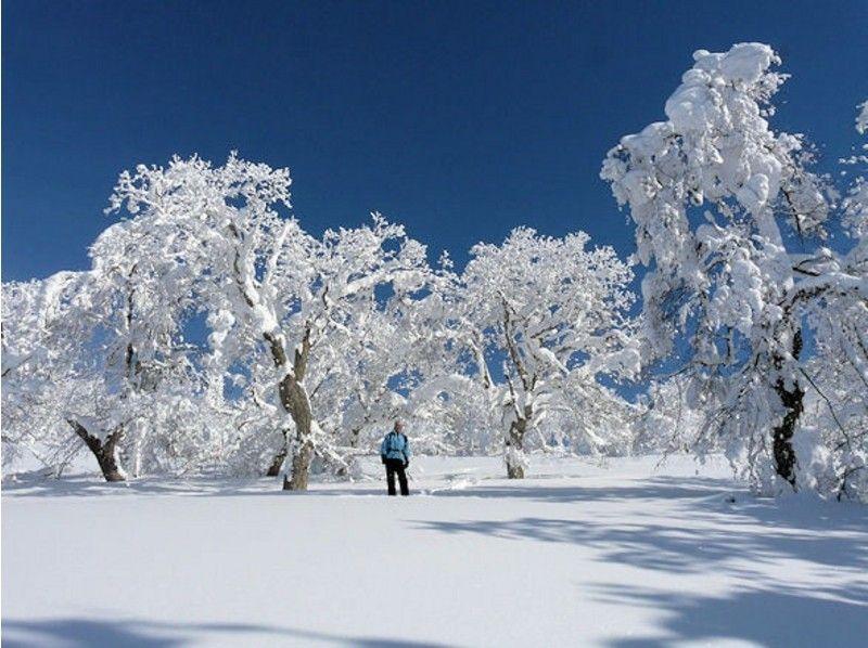 冬のアクティビティランキング スノーシュー