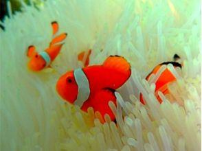 【沖縄・石垣島】美ら海2ポイントシュノーケリング&幻の島上陸(1日プラン)の画像