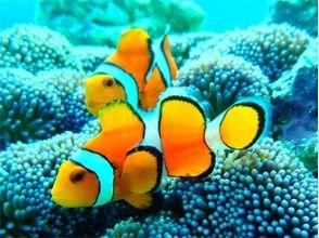 [沖繩小濱]美麗海,體驗潛水(半天計劃)※第一個歡迎!形象