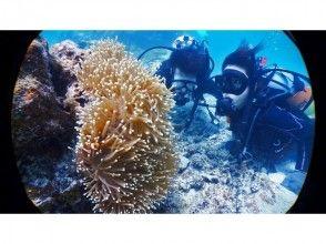【沖縄・小浜島】体験ダイビング&シュノーケリング&幻の島上陸(1日プラン)
