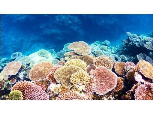 【沖縄・小浜島】秘境の海を探索!2ポイントシュノーケル(半日プラン)