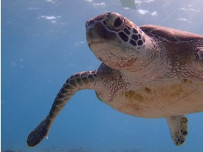 【Okinawa · Miyakojima】 Beach Snorkeling Search for Turtle Nemo by Diving Instructor's Guide!