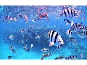 กฎบัตรเต็มรูปแบบ·แผนการดำน้ำดูปะการังชายหาด·นาย Sakamoto ·กอริลลาสับ