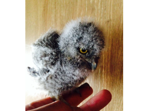 【Osaka · Minoh】 Owl and touching experience & memorial photograph ♪ image