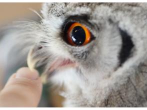 [โอซาก้า Minoo] นกฮูกและติดต่อประสบการณ์และภาพรูปภาพ♪ของที่ระลึก
