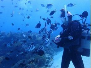 【沖縄・本部】体験ダイビング(ビーチ)崎本部ゴリラチョップ★15才からOK★の画像