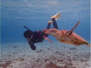 ダイビングインストラクターと行くシュノーケリング ウミガメウォッチ  #ツアー写真無料サービス